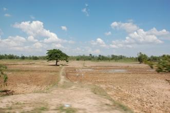Rice fields of Roi Et