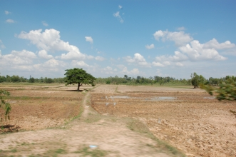 Rice fields of Roi Et