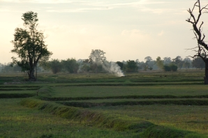 Rice fields of Ban Non