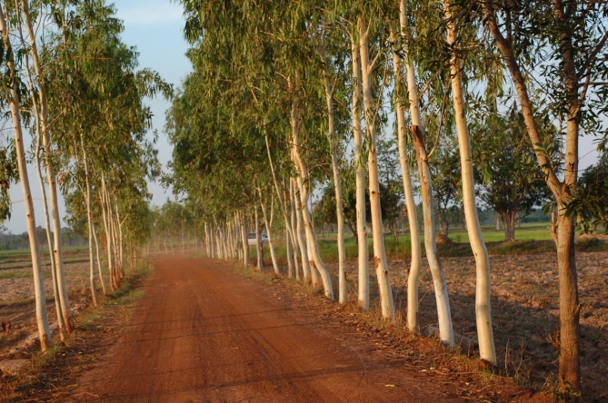 Tree-lined dirt road