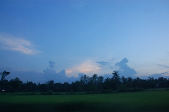 Rice fields at dusk
